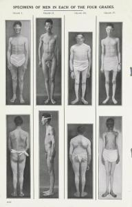 Specimens of Men in Each of the Four Grades